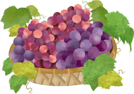 Illustration of a grape in a basket on a white background