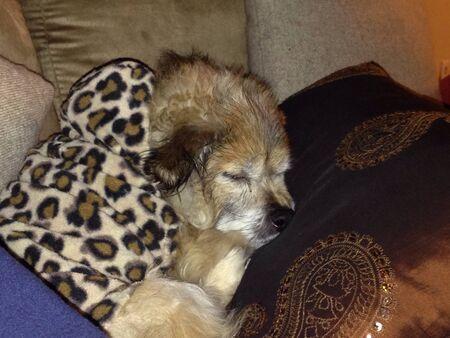 print: Mixed dog during a nap