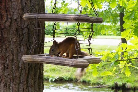 squirrel at the birdfeeder
