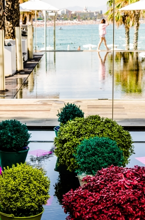 Some colorful flower pots with beautiful flowers on water and as the view of the ocean  photo