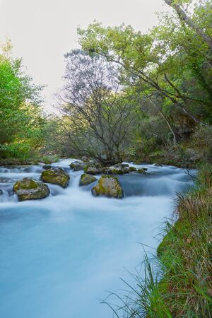 Tree inside a blurred river with rocks in front of it and green trees and plants around at shiny day