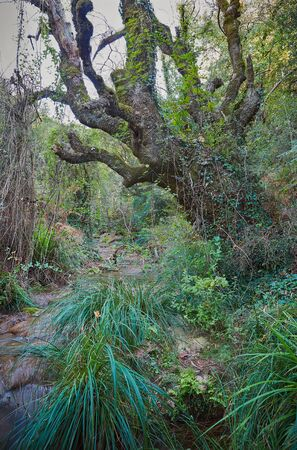 Big old tree with climbing plants on it in a stream between dense green plants at shiny summer day Banco de Imagens