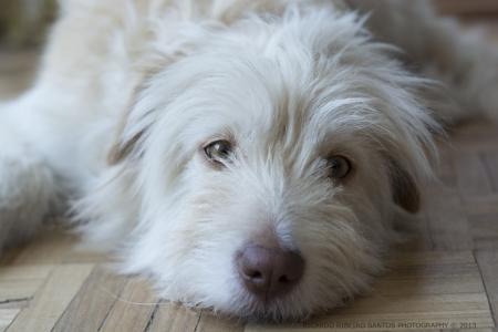 perro triste: Sad Dog