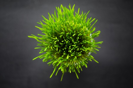 Green grass against black background, top view