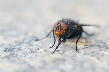 Fly on gray granite slab. Shallow depth of field background with insect Imagens