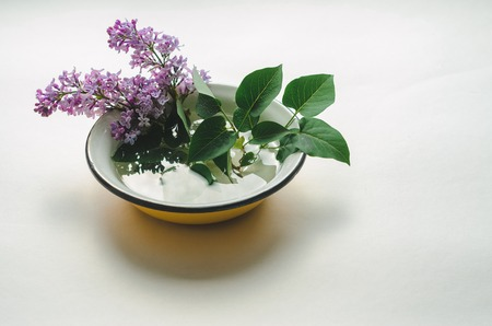 A bouquet of fresh purple lilac in a yellow enameled bowl on white background. Flowers in a vessel with water Stock Photo