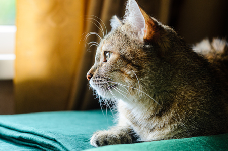 Tabby Cat Portrait. Domestic cat lying on a green pillow close-up