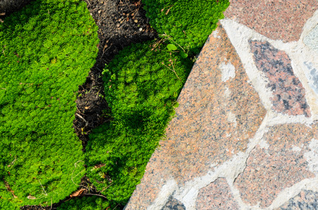 Abstract Cracked Mosaic Texture from Natural Stones with Plants. Flower Bed Element