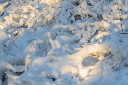 Forest floor covered in snow during winter. Sunbeams on snowy forest ground. Abstract seasonaly background