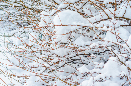 Shrubs and plants covered with a thick layer of snow. Winter weather abstract background