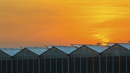 Large Industrial Greenhouse at Sunset. Gorgeous Sunset Red and Orange Sky Over the Building of Greenhouses Plant.