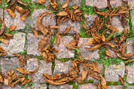Fallen Leaves on Granite Cobblestone Pavement. Red Brown Natural Stone Chopped Cobbles Background.