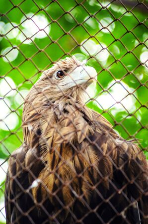 Brown Eagle in a Cage. Walk through the National Park. Summer Day, Zoo Animals, Close Up Eagle Head