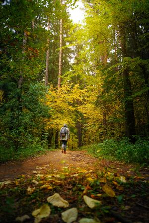 A man with backpack walks in the amazing autumn forest. Hiking alone along autumn forest paths. Travel concept. Foto de archivo - 133743912