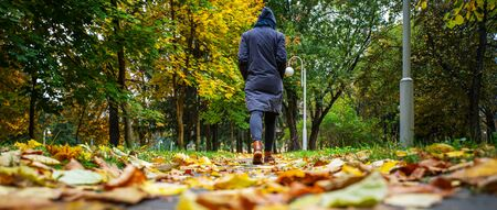 A woman in black jacket walking in a park along the sidewalk strewn with fallen leaves. The concept of turnover seasons. Weather background 版權商用圖片 - 132624764