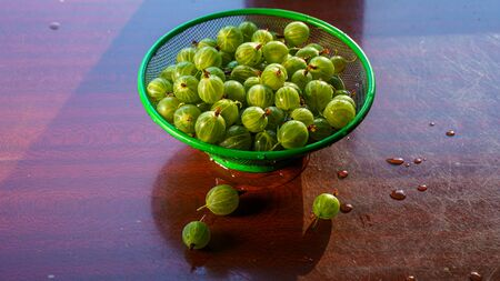 Heap of green washed gooseberry fruit in a colander on table top view Banque d'images