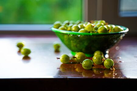 Heap of green wet washed gooseberry fruit in a colander on table. A scattering of large juicy berries on the table