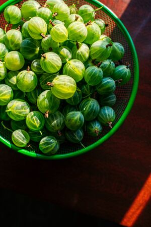 Heap of green washed gooseberry fruit in a colander on table top view Stok Fotoğraf