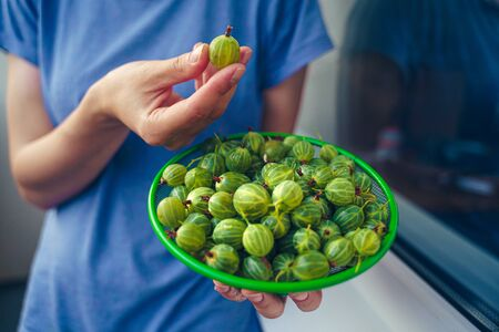The girl is holding a colander in her hands with green only washed gooseberries. Green gooseberry fruit closeup Banque d'images