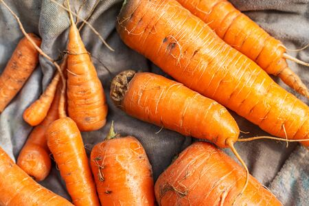 Freshly harvested, washed carrots lies on a burlap. View from above Banque d'images