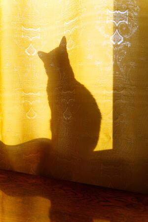 Cat silhouette behind fabric curtains in the rays of sunlight