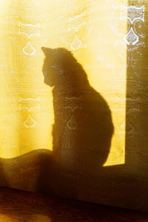 Cat silhouette behind fabric curtains in the rays of sunlight 版權商用圖片 - 146029083