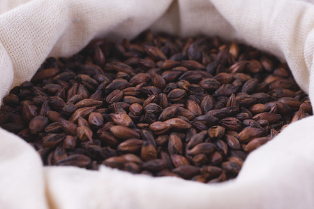 Chocolate malt in a bag. Craft beer brewing from grain barley malt in process. Ale or lager from dark pilsner malt.