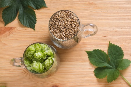 Cones of hops and pale caramel malt in glass mug, closeup. Ingredient in craft beer brewing from grain barley malt.