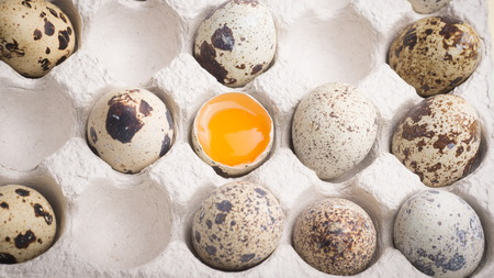 Quail eggs in random order with yolk in cardboard packaging.  Vegetarian organic food. Eco products. Stock Photo