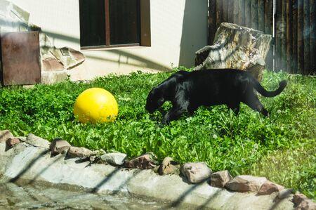 conditions of keeping wild animals in captivity. Banco de Imagens