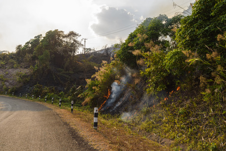 Summer forest fire in laos Stock Photo