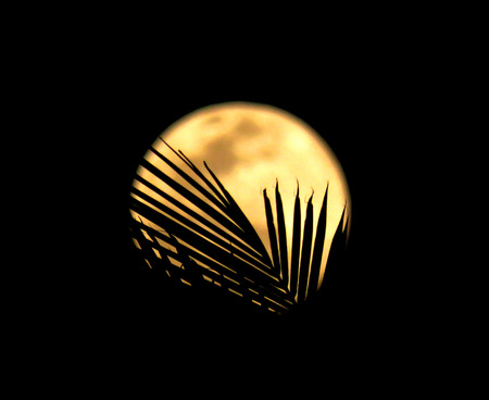 Moon in the backdrop and leaves visible over the moon. Stock Photo