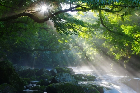 Virgin forest and shaft beam of light Stock Photo