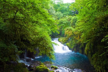 Virgin forest and waterfall photo