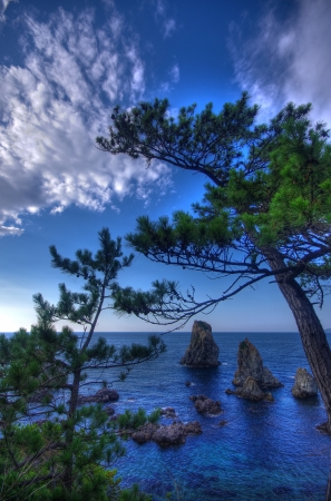 The blue sea and blue sky, and pine Standard-Bild
