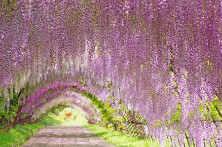 Flower arch Stock Photo