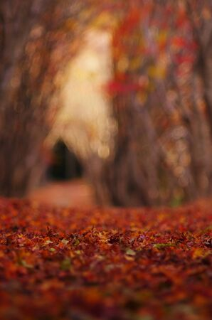 Tunnel and fallen leaves of autumnal leaves