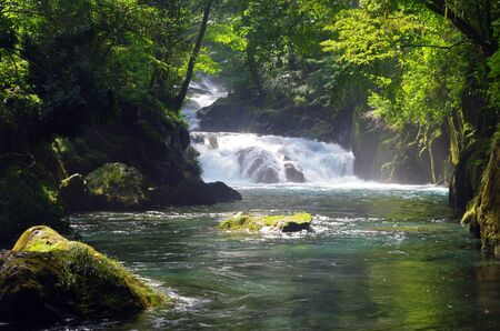 Virgin forest and waterfall