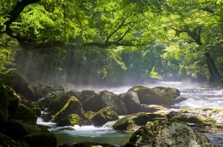 plantlife: River and shaft beam of light