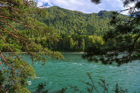 green river: A wide green river flowing at the foot of the mountains covered with forests.
