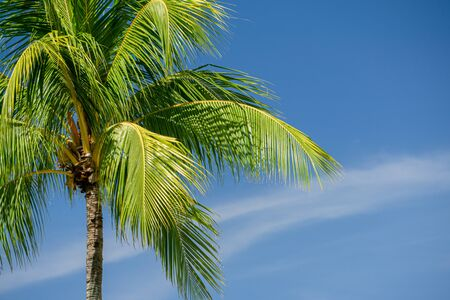 Coconut Palm Trees on Against Blue Sky