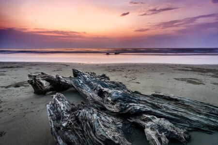 Drifted Wood at Beach Against Twilight Sunset View
