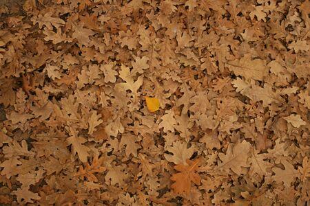 leaf texture: november