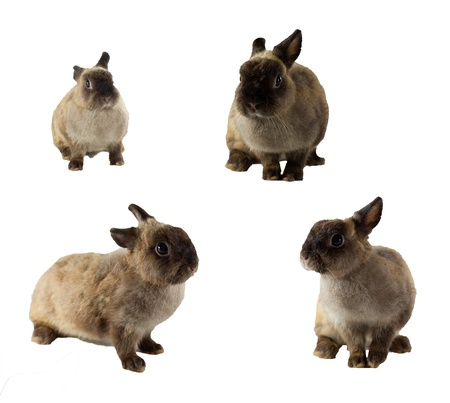 brown rabbit in many actions Stock Photo