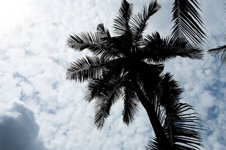 Coconut tree in blue sky and nice cloud photo