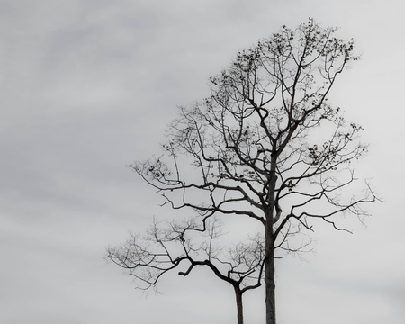 Tree in grey cloud photo