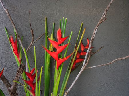 red Bird of Paradise