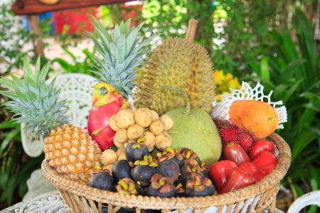 Assorted tropical fruit photo
