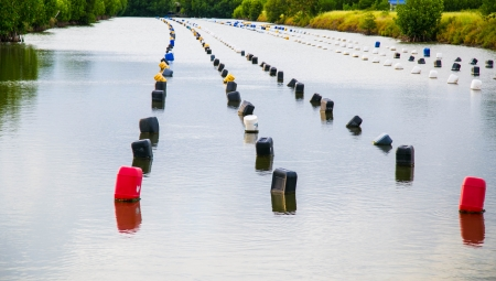 rearing of fish: Thai shrimp farm