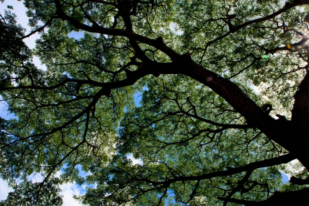 spreads: Tree spreads under blue sky